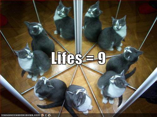 funny-pictures-cat-has-nine-lives.jpg